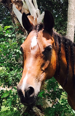 horsemanship lethbridge