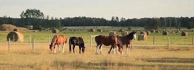 Spirit Of The Horse - Rocky Mountain House & Area