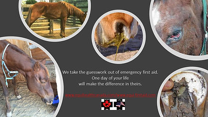 Horse First Aid Classes Saskatchewan