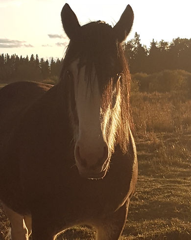 Jules - Spirit Of The Horse - Clearwater County, AB