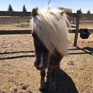 Hi Ho Silver - Empower U Equine