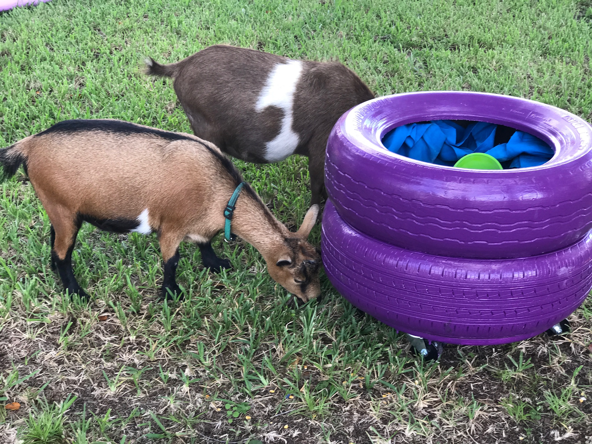 animal sensory farm