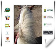 research-study-equine-assisted-learning.