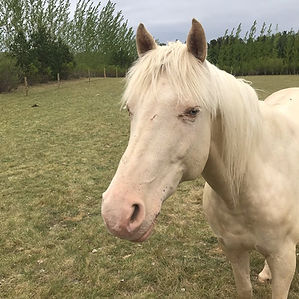 Blitz - Empower U Equine