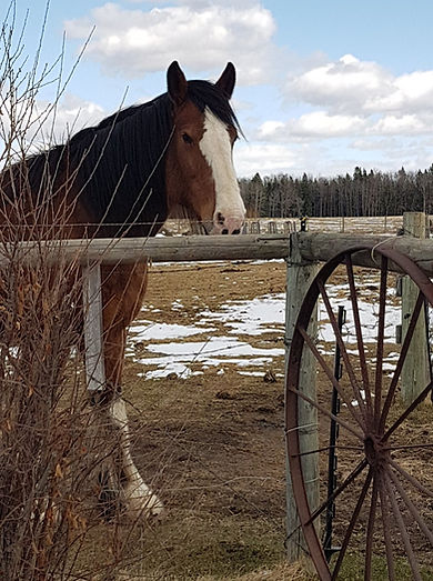 Aleah - Spirit Of The Horse - Clearwater County, AB