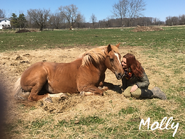 Molly - Equine Assisted Learning Teacher - Equineimity