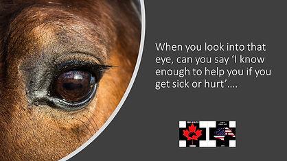 Equine First Aid Saskatchewan
