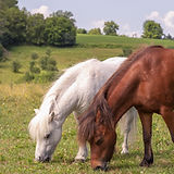 Programs With Horses - Equine Assisted Learning/Therapy For Women