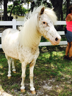 horse back riding services