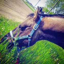 horse learning lethbridge