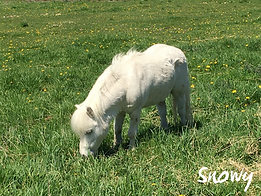 Snowy - Equine Assisted Learning Teacher - Equineimity