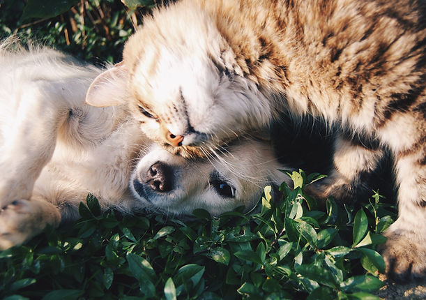Treatments for Cats - Angelcare Pet Vet