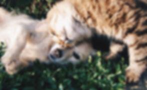 ezgif.com-webp-to-jpg.jpg