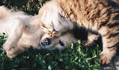RagaMuffin Cat and Dog snuggling