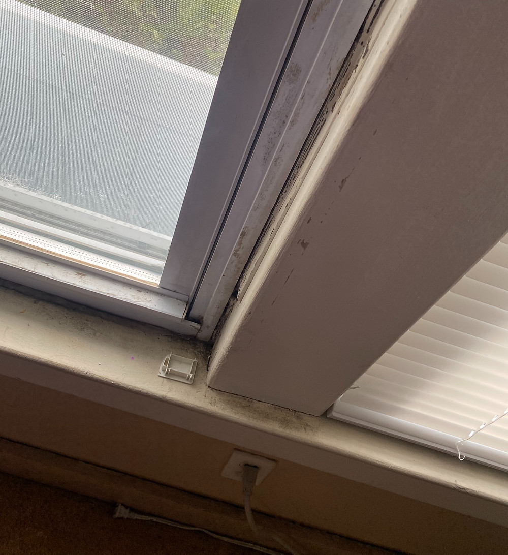 window with sill and screen and black mold