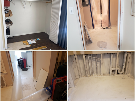 The Process of Mold Remediation