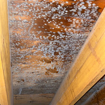 Mold in Attic Caused by Ice Dam