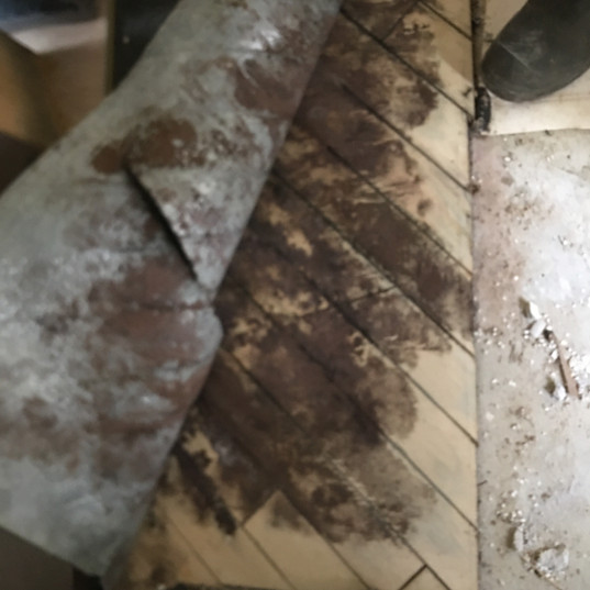 The laminate floor in this home in Monroe became damaged after a leak in the kitchen sink was discovered. Unfortunately, the floor was not dried completely, allowing mold to grow underneath it. Making sure your home is dried properly before mold has a chance to take hold is the most important step in water damage remediation.
