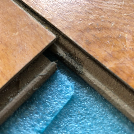Mold Grows in Laminate Floor