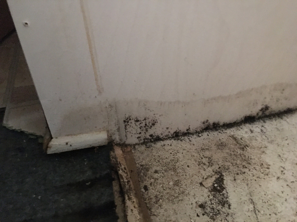 water mark on wall and mold growth on wall and floor