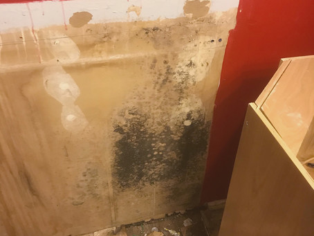 Myths About Mold