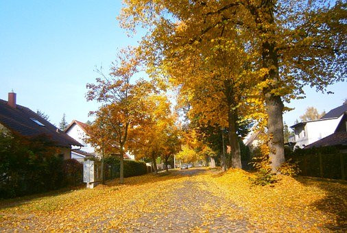 Car parked on street covered with yellow leaves
