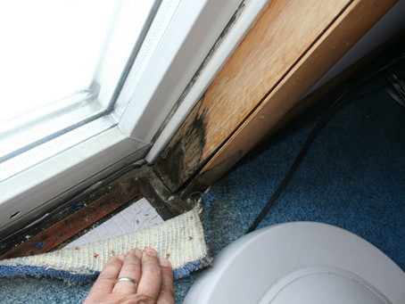 A Rainy New Jersey Spring Can Lead to Mold