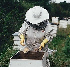 apiary-1866740_640_edited.jpg