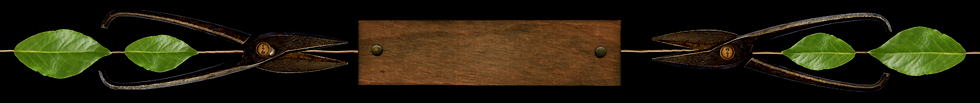 banner without name.png