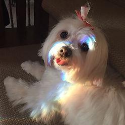 Fifi With Rainbow.jpeg
