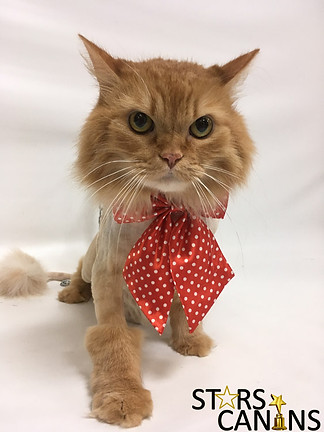 Garfield NP.jpg