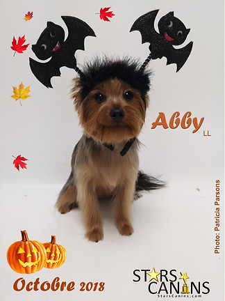 Abby LL.jpg
