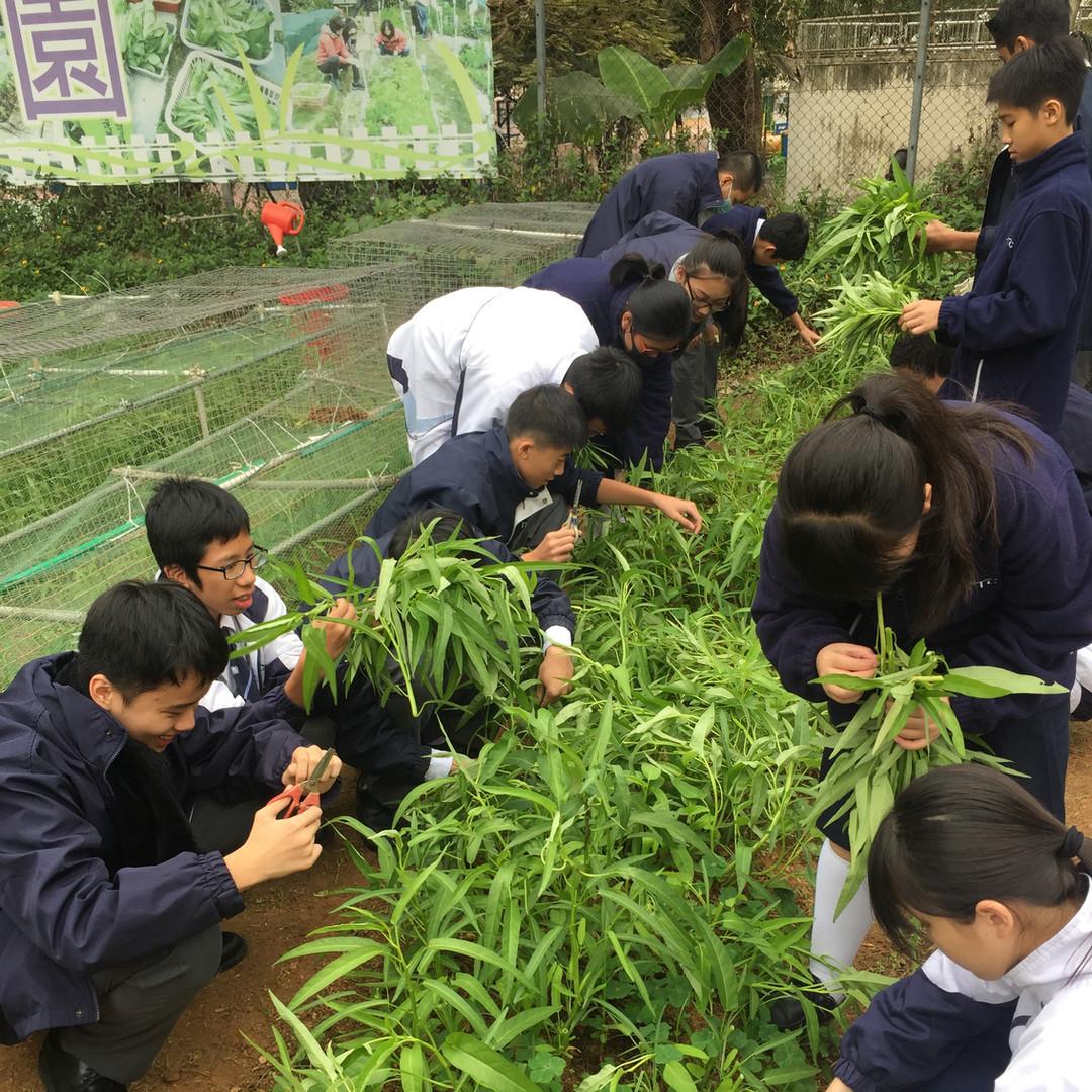 家政課-課堂學習有機食物理念,並運用伊甸園種植的有機菜入餚