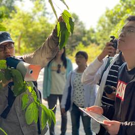 城門歷史中藥尋-龐禧年老師向同學講解植物的特性