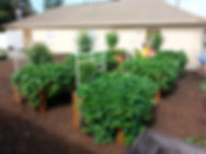 061604 garden.jpg