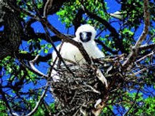 the-brando-tetiaroa-bird-island-excursio
