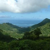 moorea-hiking-3-coconut-trees.jpg