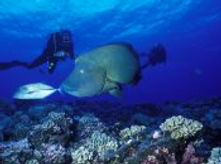 tahaa-scuba-diving.jpg