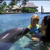 moorea-dolphin-encounter.jpg