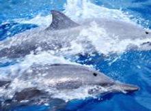 Tahiti-Dolphin-Discovery-West-Coast2-e14
