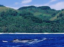 rurutu-whale-adventure.jpg