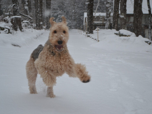 George the wonder dog!