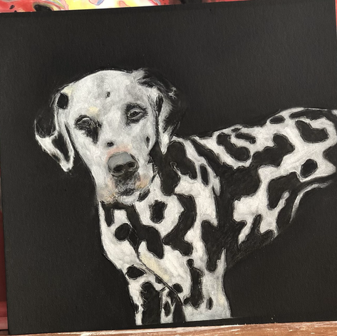 Drawing for the Dalmation Rescue Charity