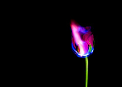 FireFlowers_003