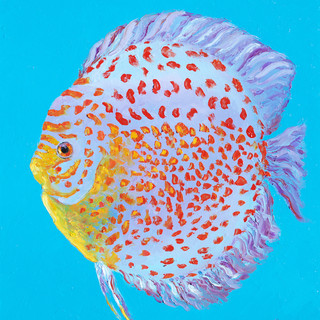 Discus fish with red spots