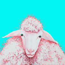 Woolly white sheep painting on blue