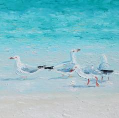 Seagulls - A Meeting of Minds