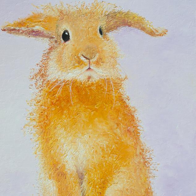 Honey, the rabbit