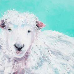 Sheep - Jeremiah