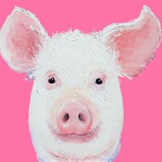 Happy Pig portrait